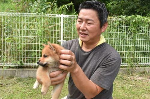 Shiba Inu puppies in Kumamoto