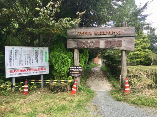 Shiba Inu Breeding Center in Kumamoto, Kyushu