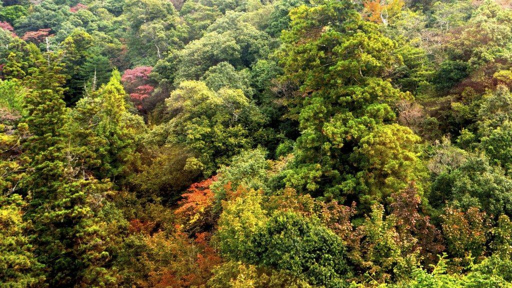 Die Natur im Herbst.