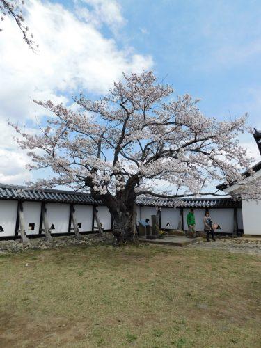 Shirakawa – Ein Ausflug in die Präfektur Fukushima