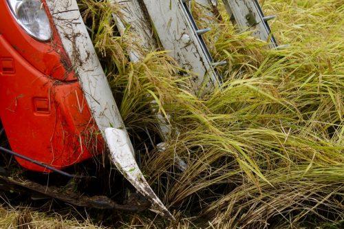 Overnight on the farm with rice harvest in Takane, near Murakami, Niigata Prefecture, Japan.
