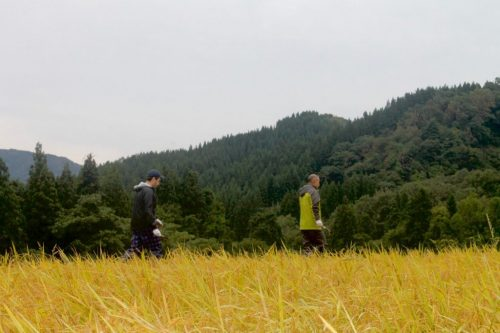 Overnight on the farm with rice harvest in Takane, near Murakami, Niigata Prefecture, Japan.
