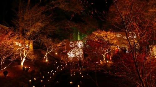 Das Laternenlicht bringt die Farben des Herbstes zur Geltung.