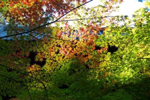 Buntes Herbstlaub in Okayama, Präfektur Okayama, Japan.