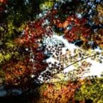 Das Herbstlaub des Sogenji Tempels in Okayama