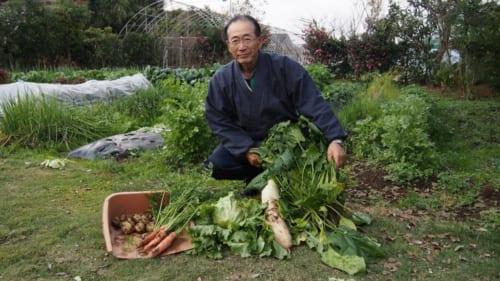 Herr Ohira bei der Ernte.
