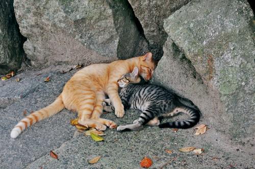 Gatos de Onomichi, Hiroshima.