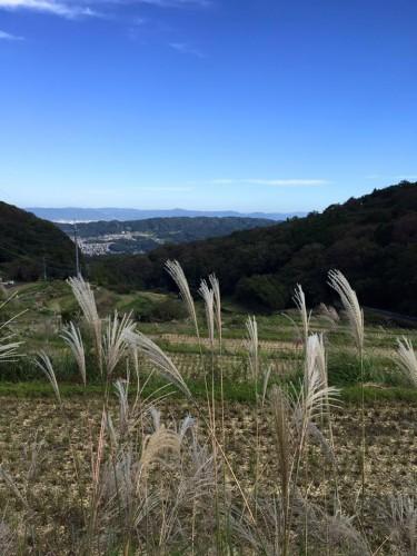 Senderos en el paisaje rural del monte Ikoma, Japón