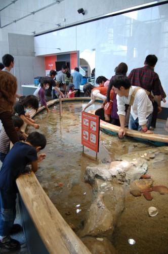 Distitnas actividades en el Acuario Kujukushima Umikirara de Nagasaki (Japón)