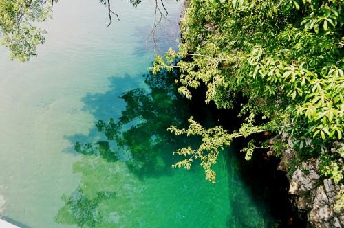 Vegetación y aguas del río Kumano
