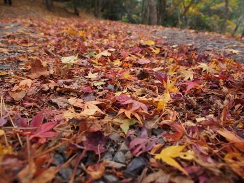 Hojas caídas otoñales en las montañas de Shodoshima