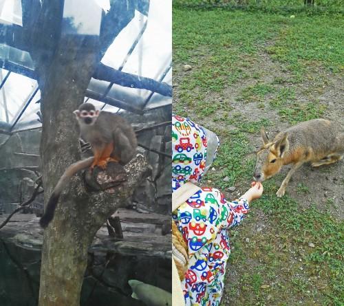 animales zoo bio park
