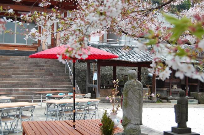 Hanami (cerezos en flor) en el jardín del templo Enmeiji de Nagasaki