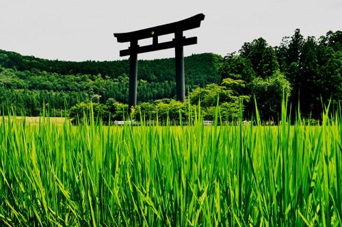 arco torii hongu taisha