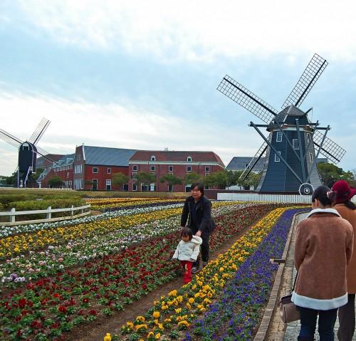 Molinos y campos de tulipanes en Huis Ten Bosch, parque temático holandés en Nagasaki