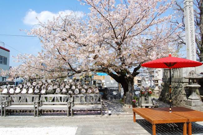 Cerezos en flor en el patio del templo Enmeiji de Nagasaki