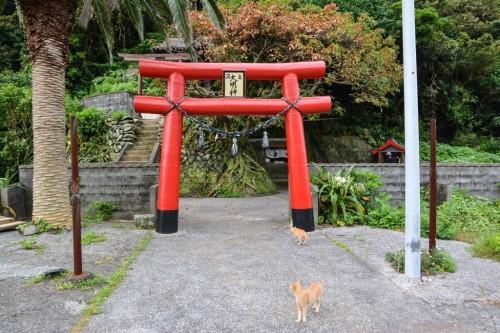 Gato callejero a la entrada de un santuario en Fukashima (Oita).