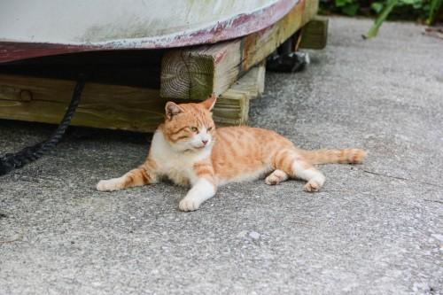 Gato de Fukashima (Oita).