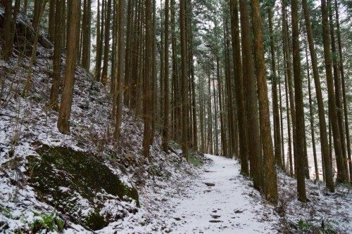 Bosque en el Cañón de Kakizore, Nagiso.