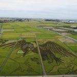 Echa un vistazo al arte del campo de arroz marcado un récord Guinness en Gyoda, Saitama
