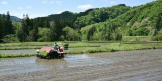 Un hombre con su tractor plantando arroz
