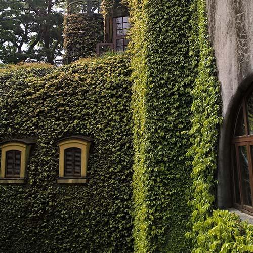 Les murs du musée Ghibli recouverts de verdure à Tokyo