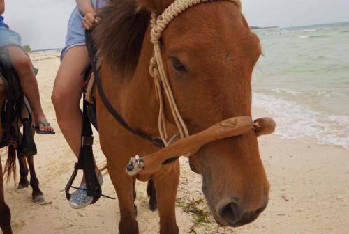 Se balader à cheval à kumejima, île d'Okinawa