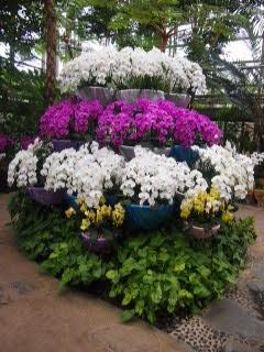 Le Tropical dream center d'Okinawa : des variétés d'orchidées du monde entier