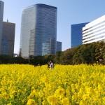 Japonais : mots et phrases à connaître pour vous faciliter la vie !