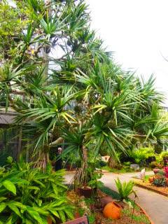 Le Tropical Dream Center d'Okinawa, joli jardin