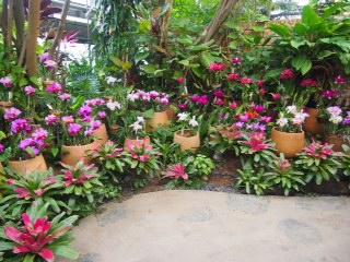 Le Tropical Dream Center d'Okinawa : un jardin botanique de rêve !