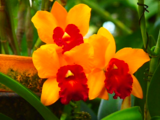 Le Tropical dream center d'Okinawa abrite plus de deux mille sortes d'orchidées