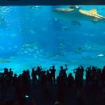 Churaumi, l'aquarium de « la belle mer » à Okinawa