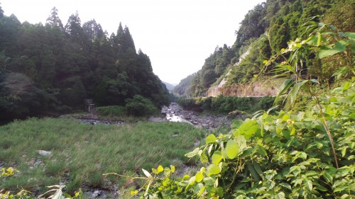 Forest therapy ou forêt-thérapie dans le parc naturel de Yabegawa, Kyūshū