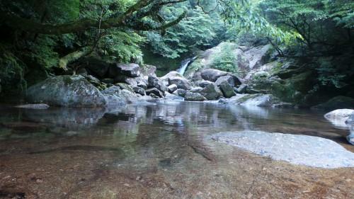 Top 10 Kyūshū : l'île de Yakushima