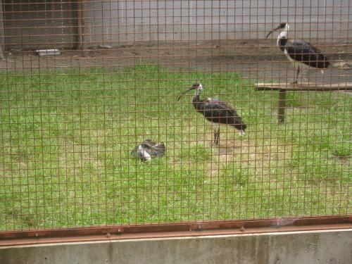D'innombrables variétés d'oiseaux sur l'île de Sado ou Sadogashima, Japon.