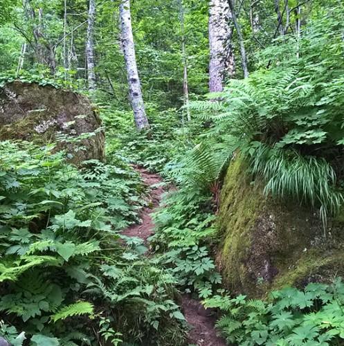 Sentier de randonnée momijidani, village onsen de Sounkyo, Hokkaido, Japon.