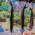 Pêche et cuisine au saumon à Murakami (Niigata)