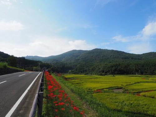 Tashibunoshou, des terres cultivés dans la région de Bungotakada (préfecture d'Oita) à Kyushu