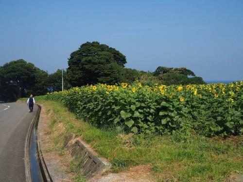 La route pour se rendre à Nagasakibana,tout près des rizières de Tashibunoshou à Oita, Kyushu