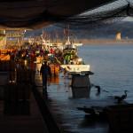 Le quotidien des pêcheurs de la baie de Toyama à Himi