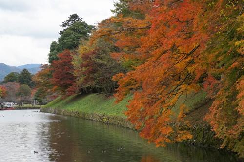 Château de Hikone, ère Edo, Japon, Histoire, Lac Biwa, Hikonyan, Momiji, douves