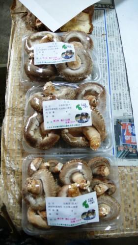 Noka minshuku, séjour à la ferme, Kitsuki, Oita, Shiitake