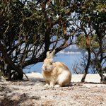 Okunoshima : l'île des lapins à Hiroshima
