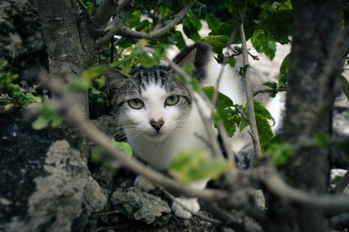 Chat dans un parc de Naha dans la Préfecture d'Okinawa, Japon