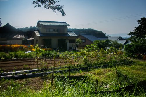 Potager d'une ferme près de la ville d'Usuki, préfecture d'Oita, Japon