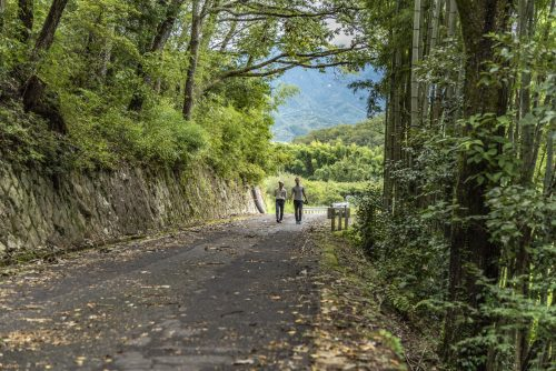 On the trail leading to Naegi Castle in Nakatsugawa, Gifu Prefecture, Japan