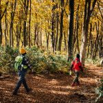 Immersion dans les couleurs de l'automne sur le Shin-etsu Trail