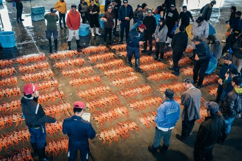 Crab auction at Shin-minato Kitokito Market.