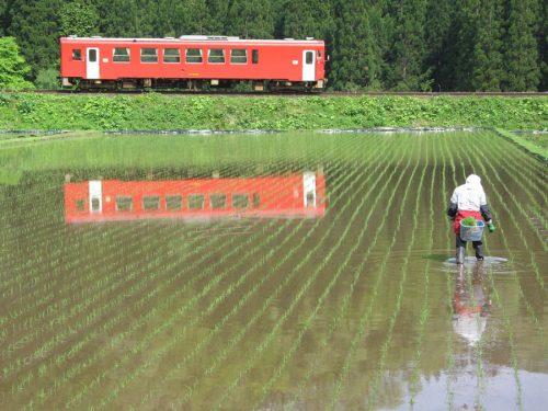 Le petit train de la ligne locale Akita Nairiku traversant les rizières, préfecture d'Akita, Japon